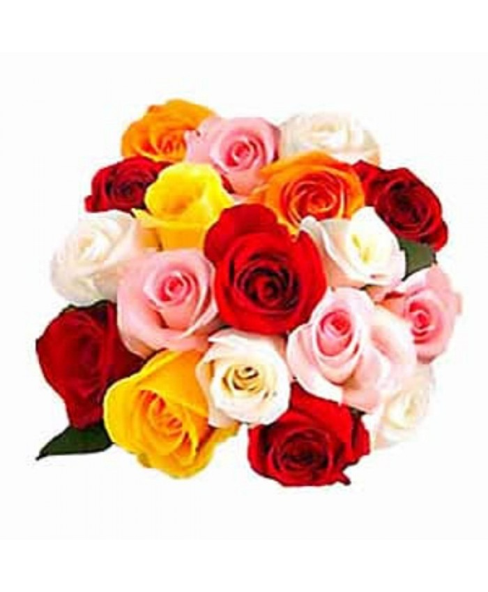 Bunch of 15 ColorFul Rose